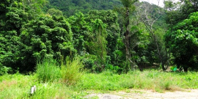 Phuket Land for Sale - Nai Harn Beach Phuket Thailand Image by Phuket Realtor