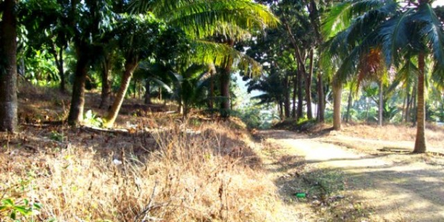 Thailand Sea View Land - Koh Sirey Phuket Large Land Plot for Sale Image by Phuket Realtor