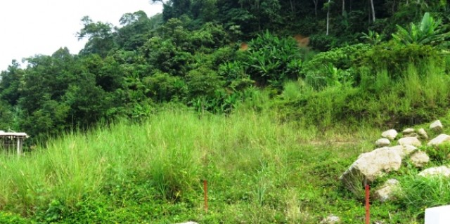 Thailand Sea View Land - Kamala Phuket Land Plot for Sale Image by Phuket Realtor