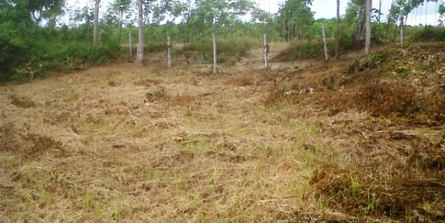 Thailand Properties - Mission Hills Land Plot for Sale Image by Phuket Realtor