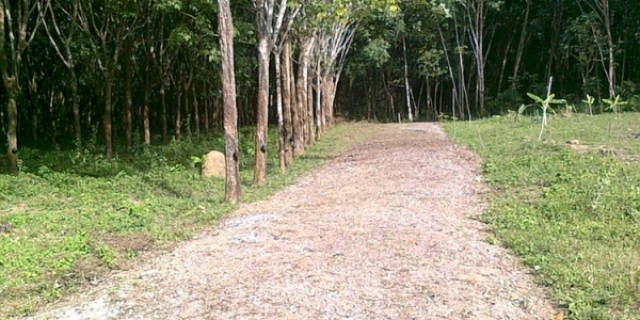 Thailand Property - East Phuket Land Plot for Sale Image by Phuket Realtor