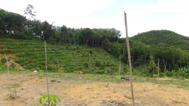 Beautiful Island Land Plots for Sale 2-4 Rai Each Image by Phuket Realtor