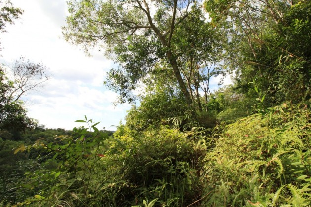 Too Good to be True | Partial Sea View Land for Sale | Layan Phuket Thailand Image by Phuket Realtor