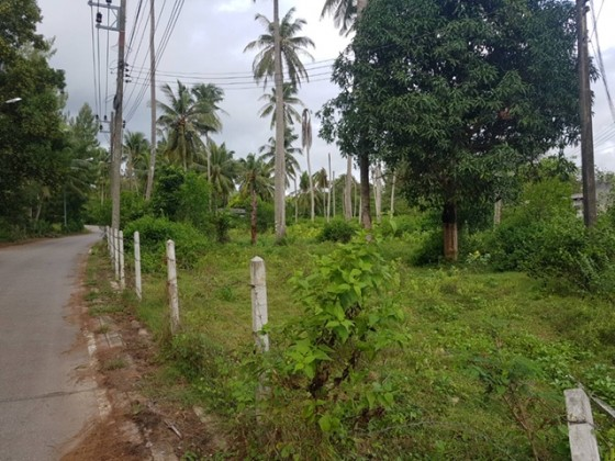Buy this and Walk to the Beach | Mai Khao Land Plot for Sale | 200m from Beach Image by Phuket Realtor