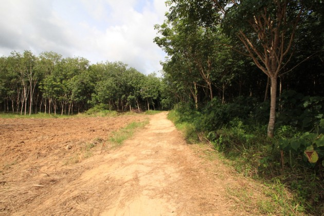 Thailand Property - Quiet Krabi Chanote Land Plots for Sale Image by Phuket Realtor